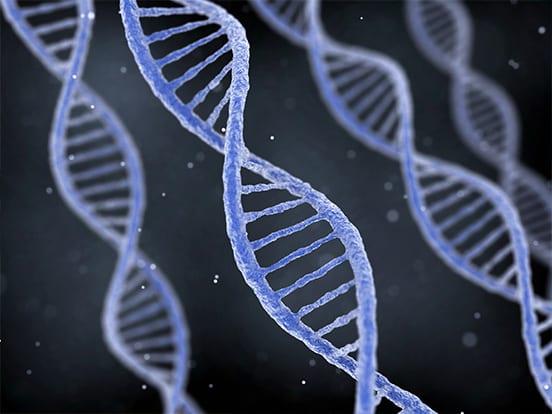 cDNA clones & ORFs from AMS Bio's cDNA library